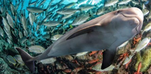 改变海洋生物多样性的发现和监测