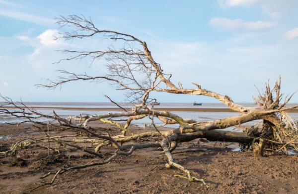 对于湄公河三角洲的农民来说 多样化是抵御气候变化的关键